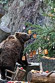 Christmas Day – Bear Christmas in Český Krumlov 24.12.2019, photo by: Lubor Mrázek